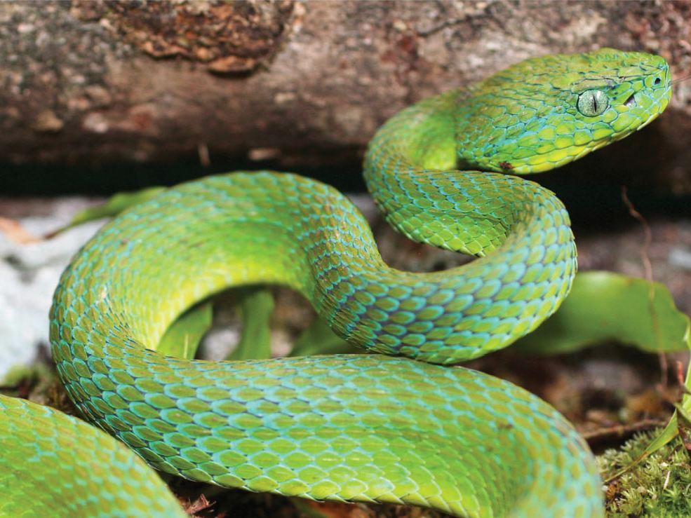 титулованная все виды змей фото с названиями чем
