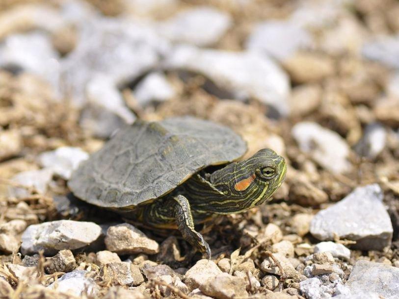 нашем спячка черепах в картинках здесь