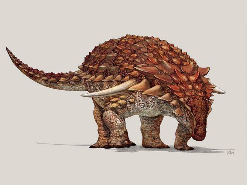 Картинки по запросу анкилозавр
